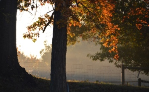fall morning mist