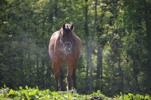 horse sneeze