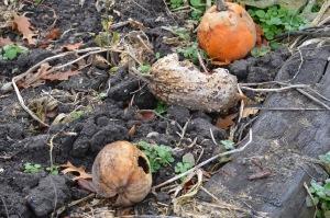 PumpkinGraveyard