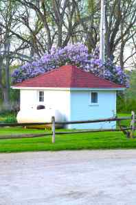 Lilac crowning milk house
