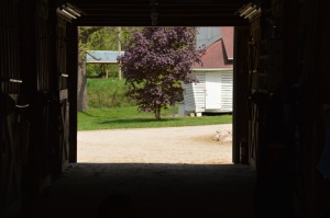 Spring View from the Barn